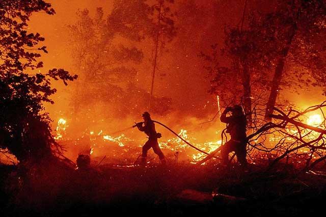 Maldem Wild Fire Photo